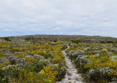 Cape Point Hiking Trail - Helen _ Sarah Oct 2014_0017