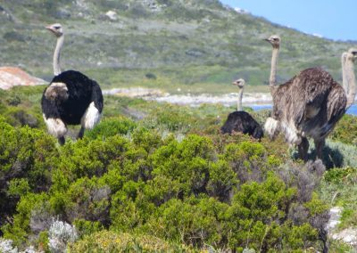 Cape Point Hiking Trail - Helen _ Sarah Oct 2014_0025