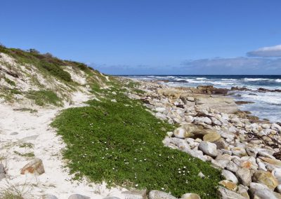 Cape Point Hiking Trail - Helen _ Sarah Oct 2014_0030
