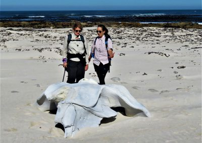 Cape Point Hiking Trail-Sirkelsvlei-Circuit-_-Shipwreck0007