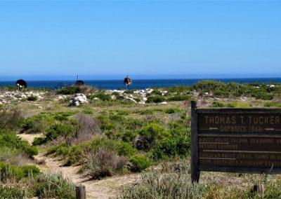 Cape Point Hiking Trail-Sirkelsvlei-Circuit-_-Shipwreck0042