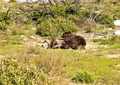 Cape Point Hiking Trail0076