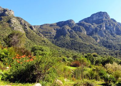 Day-Hikes-Kirstenbosch-WOC-Tour-0022