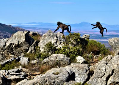 Day-Hikes-Uitkyk-Trail-Lent-Group---May-20180040