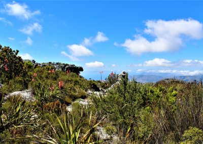 Table Mountain Trail OPT0003