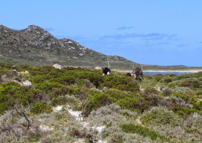 Cape of Good Hope - Gifkommetjie Circuit-05