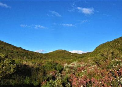 Fynbos Trail Opt0001