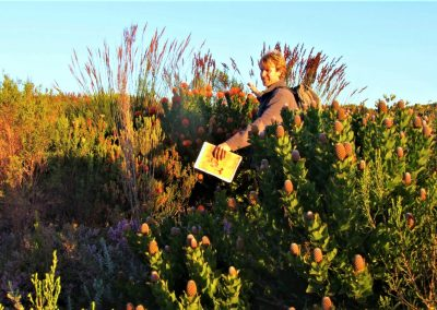 Fynbos Trail Opt0004