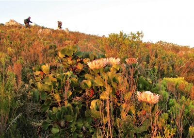 Fynbos Trail Opt0006