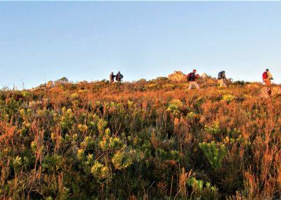 Fynbos Trail Opt0007