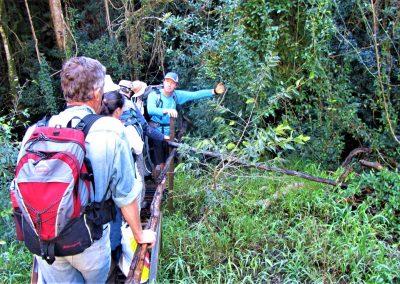 Fynbos Trail Opt0010