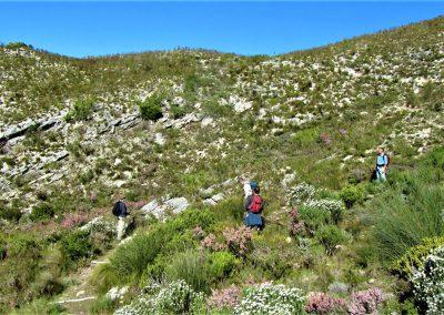 Fynbos Trail Opt0011