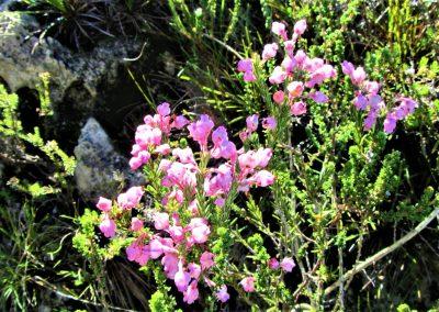 Fynbos Trail Opt0012