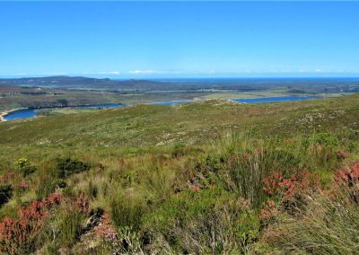 Fynbos Trail Opt0013