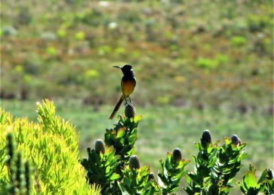 Fynbos Trail Opt0014