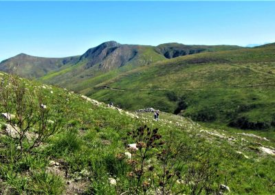 Fynbos Trail Opt0015