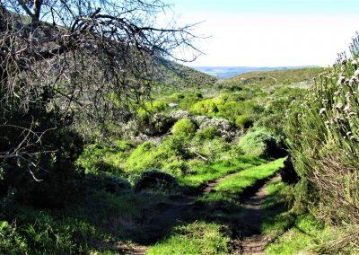 Fynbos Trail Opt0017