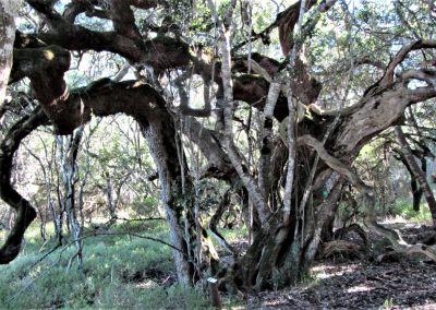 Fynbos Trail Opt0019
