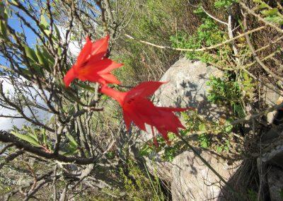 Cape Country - Klapmutskop