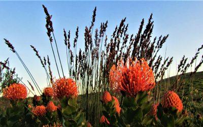 Fynbos Trail